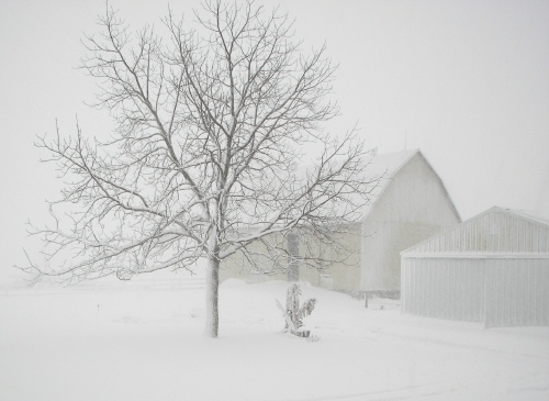 Barn during a blizzard